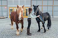 09.02.2020 Magdeburg, Messe Magdeburg, Reitsportmesse Magdeburg, Carola Gerking, Pferdetrainerin.<br /> <br /> Vor den Messehallen in Magdeburg. Normalerweise trifft man hier keine Pferde - außer es ist Reitsportmesse. Carola Gerking wartet mit ihren Pferden auf ihren Auftritt. Sie will dem Publikum in der Halle von ihrer Partnerschaftlichen Zusammenarbeit mit den Tieren erzählen, so soll auch das Verladen der Tiere völlig stressfrei für beide seiten verlaufen. <br /> <br /> © Harald Krieg