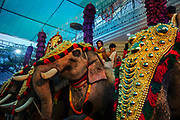 Hindu spring festival in Temple on 28th February 2018 near Kovalam, Kerala, India. Hindu and Buddhist traditions give elephants an elevated status. Hindus revere elephants as an incarnation of elephant god Ganesha, the Lord of luck and prosperity.
