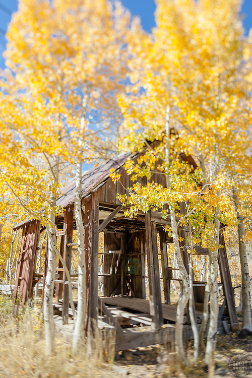 """""""Shack in the Aspens 7"""" - This old shack and yellow aspen trees were photographed in the Fall near Brockway Summit in Tahoe. A tilt-shift lens was used to create the focus effect."""