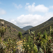 A steep valley in the heath zone of Mt Kilimanjaro's Lemosho Trail at about 10,000 feet.