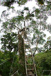 View Of Ladder Above Treetop Canopy, Tiputini
