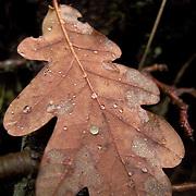 Water drops over leaf at leaf at forest of Barroso region
