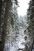 Looking through spruces over river Loja on snowy and gray winter day, Murjāņi, Gauja National Park (Gaujas Nacionālais parks), Latvia Ⓒ Davis Ulands | davisulands.com