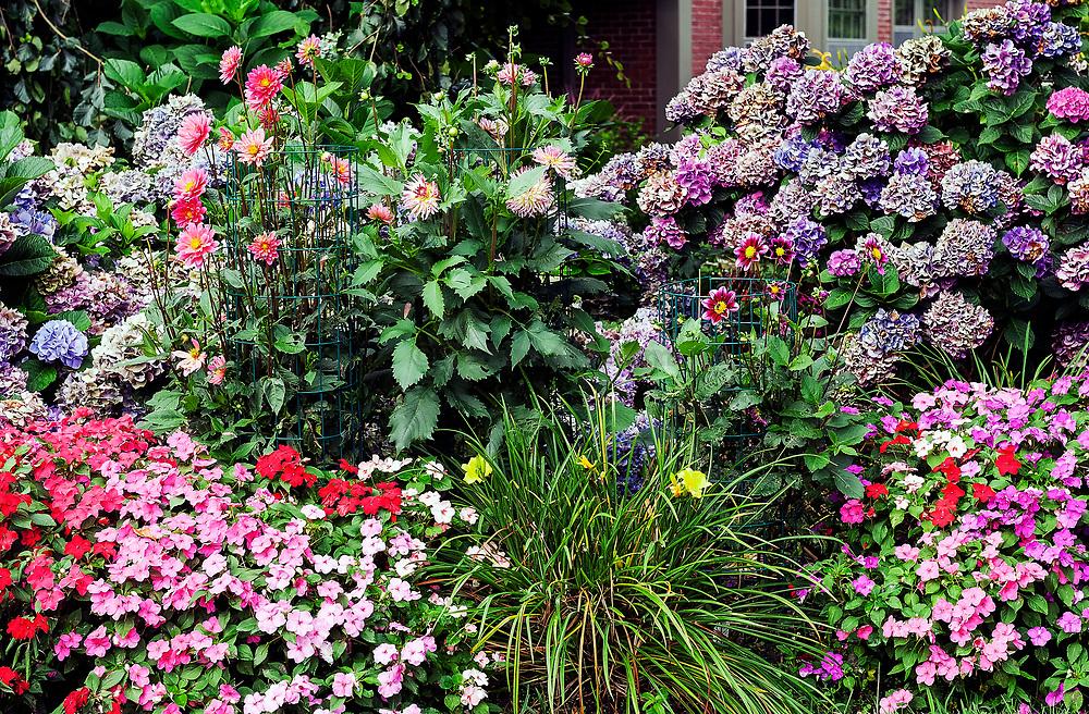 Flower garden in full bloom.