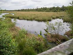 Engbertsdijksvenen, Hardenberg, Kloosterhaar, Nederland, Netherlands,