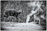 05-11-2017  Foto's genomen tijdens een persreis naar Buffalo City, een gemeente binnen de Zuid-Afrikaanse provincie Oost-Kaap. East London Golf Club - Nyala
