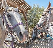 Closeup portrait of a horse