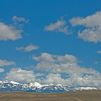 Cattle graze below the Crazy Mountains in Montana's Shields Valley.
