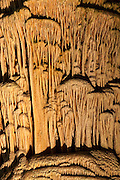 A close-up shows the detail of the texture of the Giant Dome Column, located in the Hall of Giants in Carlsbad Caverns National Park, New Mexico. Giant Dome, like the other speleothems in the Hall of Giants, began as small calcite deposits on the cavern floor. Dripping water resulted in more calcite building up on the initial deposits, gradually building the small formations into large stalagmites. Giant Dome eventually grew to touch the ceiling, turning it from a stalgmite into a column that is 62 feet (19 meters) tall.