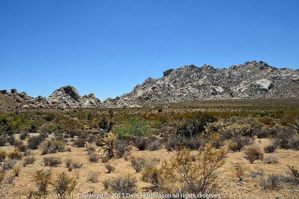 Mohave Desert 2013, California, USA.