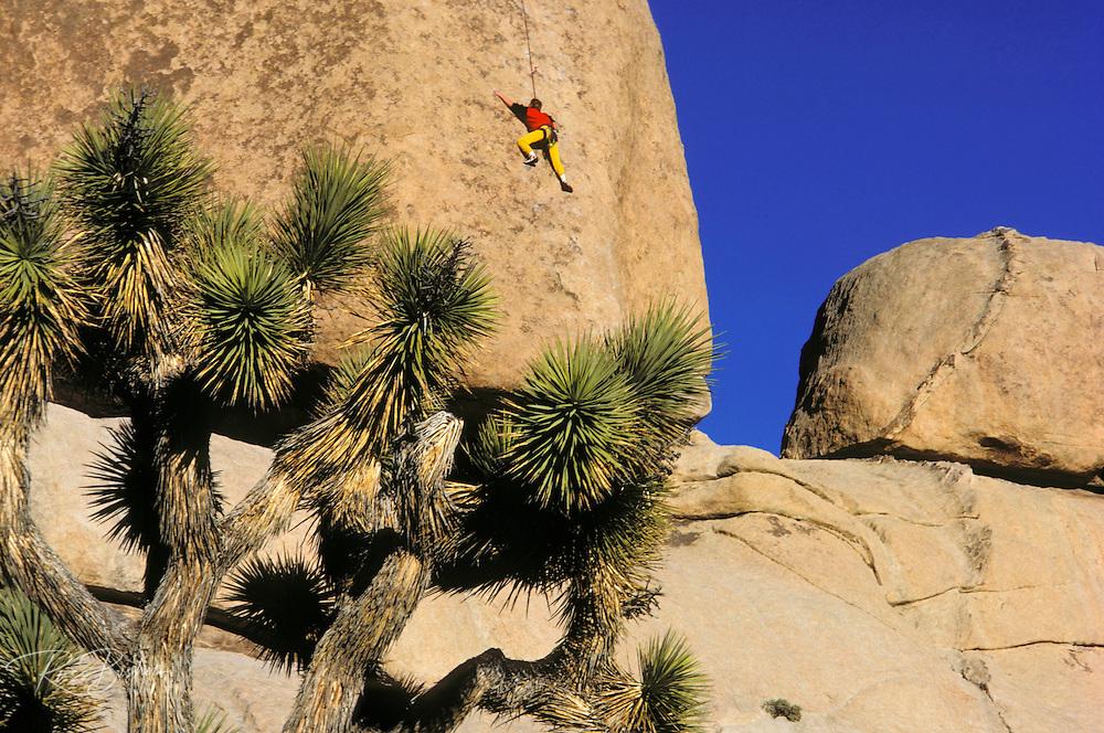 Joshua Tree and rock climber on boulder in Echo Cove, Joshua Tree National Park, California