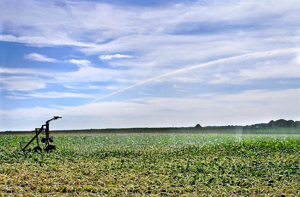 Nederland, Groesbeek, 16-7-2018 Boeren laten hun land beregenen door een loonbedrijf, loonwerkersbedrijf, vanwege de langdurige, aanhoudende droogte. Een veld met suikerbieten wordt besproeid .Foto: Flip Franssen