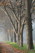 Misty, foggy Morning