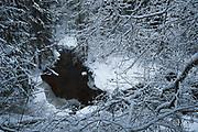 Snowy day in forest around River Loja, Murjāņi, Gauja National Park (Gaujas Nacionālais parks), Latvia Ⓒ Davis Ulands   davisulands.com