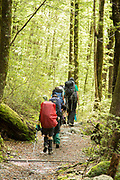 Group of backpackers hiking in forest along the Routeburn Track, South Island, New Zealand