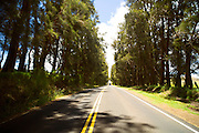 Kohala Mountain Road,Island of Hawaii