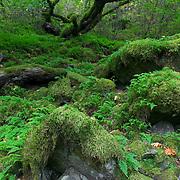 Horsetail Falls Trail, Columbia River Gorge rainforest, Oregon