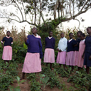 The Stars Foundation visiting Action in the Community Environment (ACE) in Bungoma, Kenya...Girls who are all taking part in child-to-child (CTC) workshops learning life skills and how to grow their own vegetables. The girls either grow them at the school, like this patch of Managu or at home to supplement their daily food. Some of the girls get very little food at home and ACE in collaboration with the school try to give the girls access to nutritious food. Managu (Kikuyu) is a vegetable rich in vitamin C and iron..Here a group of girls from the CTC classes perform a song about HIV and how to protect themselves.
