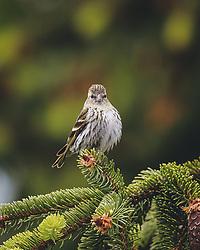 THEMENBILD - ein Vogel sitzt auf einem Ast, aufgenommen am 06. Juni 2020 in Piesendorf, Oesterreich // a bird sits on a branch, in Piesendorf, Austria on 2020/06/06. EXPA Pictures © 2020, PhotoCredit: EXPA/Stefanie Oberhauser