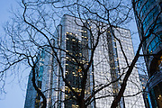 Evening tree silhouette, Vancouver downtown glass building, British Columbia, Canada.