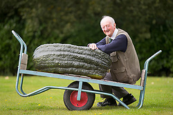 © Licensed to London News Pictures. 15/09/2017. Harrogate UK. at the Giant Vegetable competition at this years Harrogate Autumn Flower Show in Yorkshire. Photo Credit: Andrew McCaren/LNP