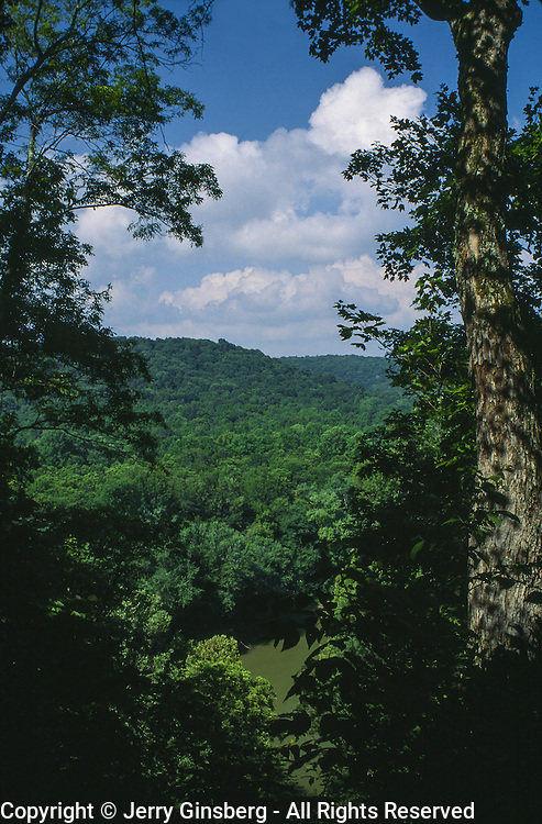 North America, USA, Appalachia, East, Kentucky, KY, Mammoth Cave National Park, Forest in Mammoth National Park, KY.