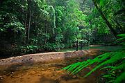 Nova Lima_MG, Brasil.<br /> <br /> Estacao Ecologica de Fechos em Nova Lima, Minas Gerais.<br /> <br /> Fechos Ecological Station in Nova Lima, Minas Gerais.<br /> <br /> Foto: JOAO MARCOS ROSA  /NITRO