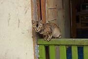 A pet cat emerges from the door of a family home in an urbanized Orang Asli village in Johore, Malaysia.