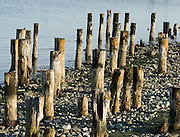 Posts of an old pier erode and decay on a rocky beach at historic Port Townsend, Washington, USA.