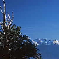A Bristlecone Pine in California's White Mountains juxtaposes with the Palisade Glacier region of the adjacent Sierra Nevada, across the dramatic Owens Valley.