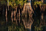 Cypress Trunk Lake Dauterive