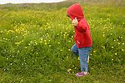 A toddler runs through a field of buttercups near Crescent City, California, spring