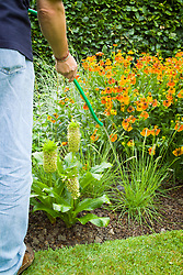 Watering a garden border with a hosepipe