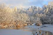 Several mallard ducks (Anas platyrhynchos) gather in the thawed portion of Scriber Lake in Lynnwood, Washington, during a sunny break between snow storms.