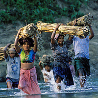 Asia, Nepal, Chitwan. Grasscutters at Chitwan National Park carrying bundles accross the river.