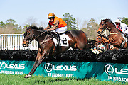 27 March 2010 : William Dowling and AMBERSHAM lead the field over a hurdle in the Woodward Kirkover hurdle race at the Carolina Cup.