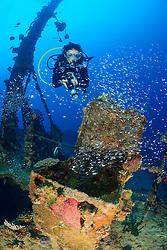 Wrack MV Kudhi Maa und Taucher, Malediven, Mahchafushi, Ari Atoll, Shipwreck Kudhi Maa and scuba diver, Maldives
