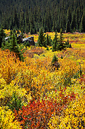 Fall color, Independence Pass, Colorado