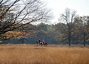© Licensed to London News Pictures. 04/11/2014. Richmond, UK. Horses and their riders cross the park.  People and animals enjoy the warm sunshine in Richmond Park, Surrey today 4th November. Britain has experienced unseasonably warm weather recently.  Photo credit : Stephen Simpson/LNP