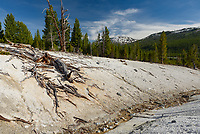 This backcountry thermal area is a 3.5 mile hike from the Lamar Valley trailhead. The water running through was not hot, but highly sulfuric. The sulfur gases could be seen bubbling through the mud.
