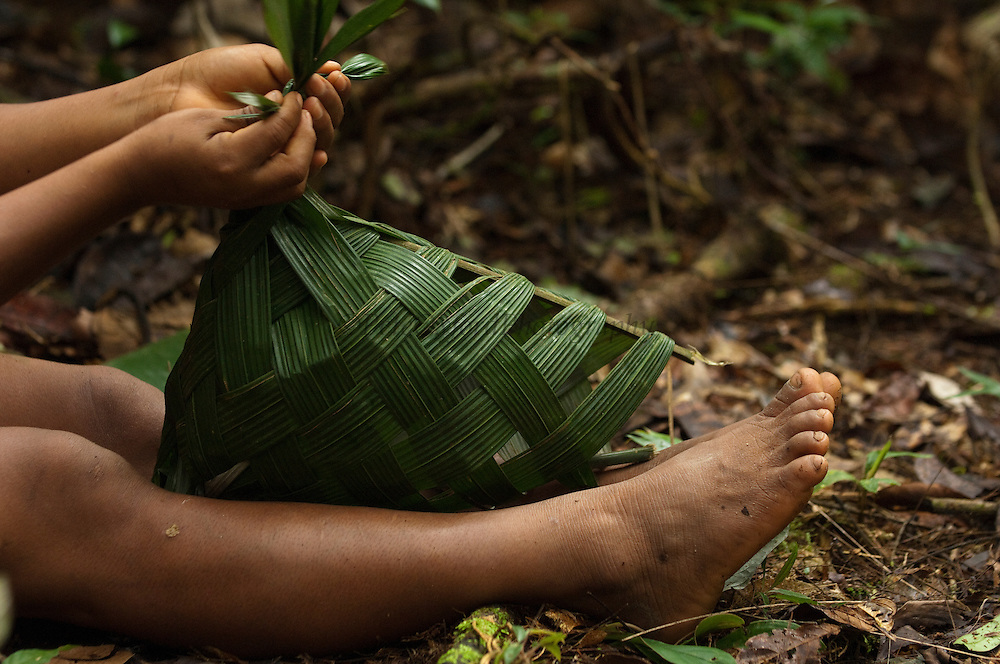 Huaorani Indian girl - making a basket from palm leaves. Gabaro Community. Yasuni National Park.<br /> Amazon rainforest, ECUADOR.  South America<br /> These are one time use baskets to carry things home and then are discarded.<br /> This Indian tribe were basically uncontacted until 1956 when missionaries from the Summer Institute of Linguistics made contact with them. However there are still some groups from the tribe that remain uncontacted.  They are known as the Tagaeri and Taromanani. Traditionally these Indians were very hostile and killed many people who tried to enter into their territory. Their territory is in the Yasuni National Park which is now also being exploited for oil.