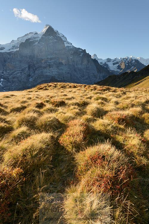 Berner Hochalpen mit Scheidegg Wetterhorn (3361) Mönch (4107) und Eiger (3970) beim Gummi oberhalb der Grossen Scheidegg bei Grindelwald an einem schönen Herbstmorgen im Oktober.