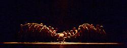 English National Ballet <br /> Triple Bill<br /> at Sadler's Wells, London, Great Britain <br /> rehearsal <br /> 7th September 2015 <br /> <br /> Dust<br /> by Akram Khan <br /> <br /> Tamara Rojo <br /> James Streeter <br /> Fabian Reimair <br /> <br /> <br /> Photograph by Elliott Franks <br /> Image licensed to Elliott Franks Photography Services
