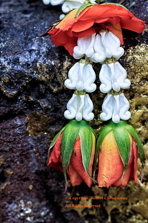 Flowers Alter: A close up view of two roses placed at a Buddhist rock alter, Wat Bawan Niwet, Bangkok Thailand.