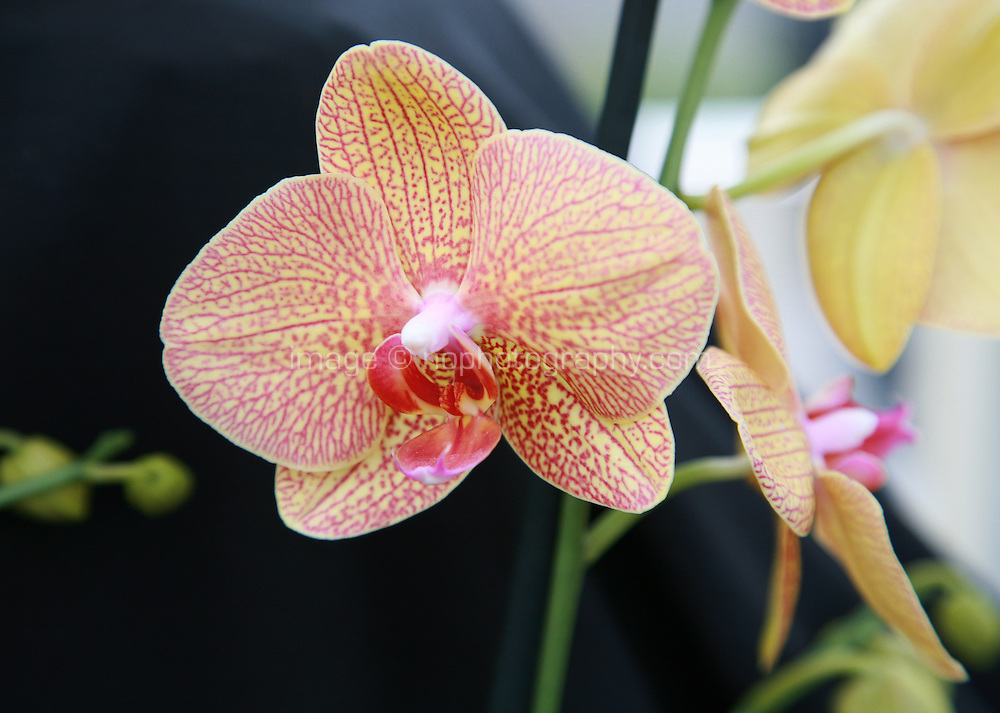 Close up of yellow and red Orchid plant flowers. Photography by Doreen Kennedy