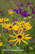 63899-05501 Sweet Black-eyed Susan (Rudbeckia subtomentosa) and Missouri Ironweed (Vernonia missurica) Marion Co., IL