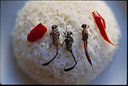 Dragonflies, de-winged, salted, and fried in coconut oil, with a sweet pepper garnish, over steamed rice; in a guesthouse in Ubud, Bali, Indonesia. (page 56 Inset.  See also page 7)