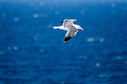Anacapa is known for its plethora of birds.