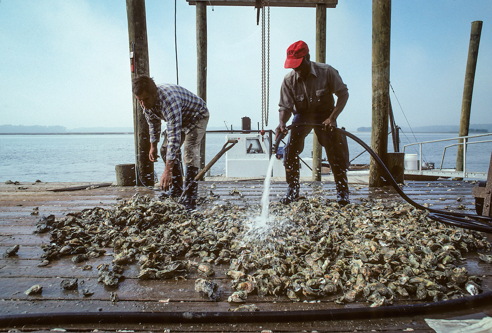 Oystermen wash their harvest on the docks of the Bluffton Oyster Company in 1990.