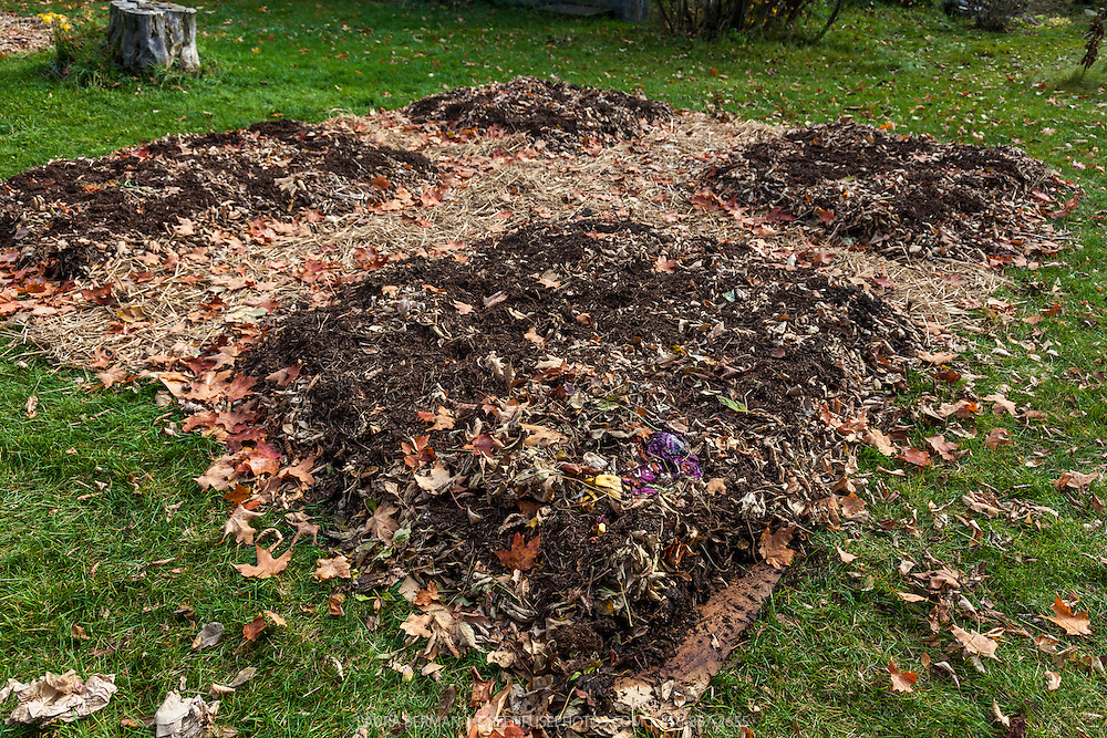 A lasagna garden: a technique for building new garden beds in which layers of organic matter are piled on each other, lasagna-style. The first layer is usually cardboard or newspapers to prevent any grass from invading the bed. Then compost, leaves, manure, straw, and any other organic matter at hand are added in successive layers. The garden can be planted immediately but it's even better to build it in the fall to give the layers time to break down into a fine organic humus before planting in the spring.